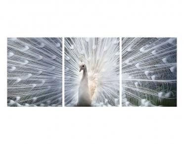 تابلوه مودرن - طاووس ابيض- 3 قطع  خشب - 50x120