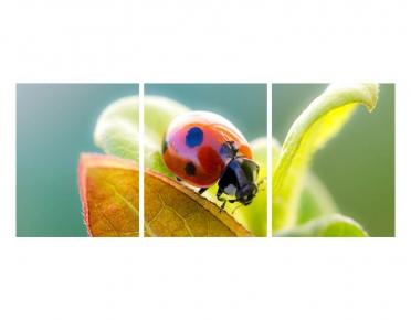 تابلوه مودرن -  حشرة ملونة - 3 قطع  خشب - 50x120