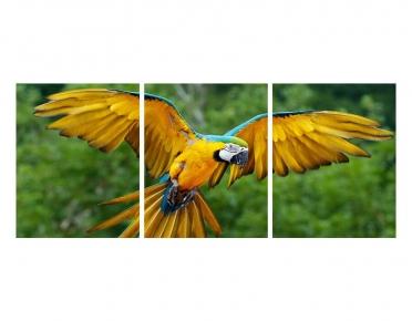 تابلوه مودرن - طائر البغبغاء- 3 قطع  خشب - 50x120